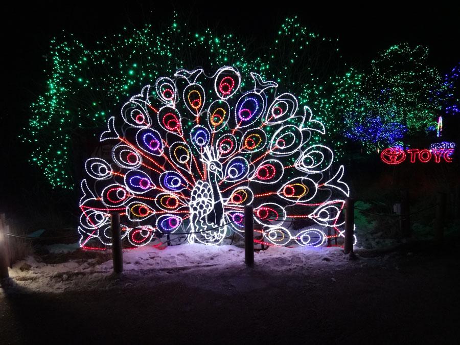 Zoo Lights Colorado