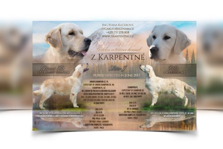 Breeder webdesign  dog kennel design  Best dog breeder webdesign     Designed mating flyers for puppies announcements and matings      33