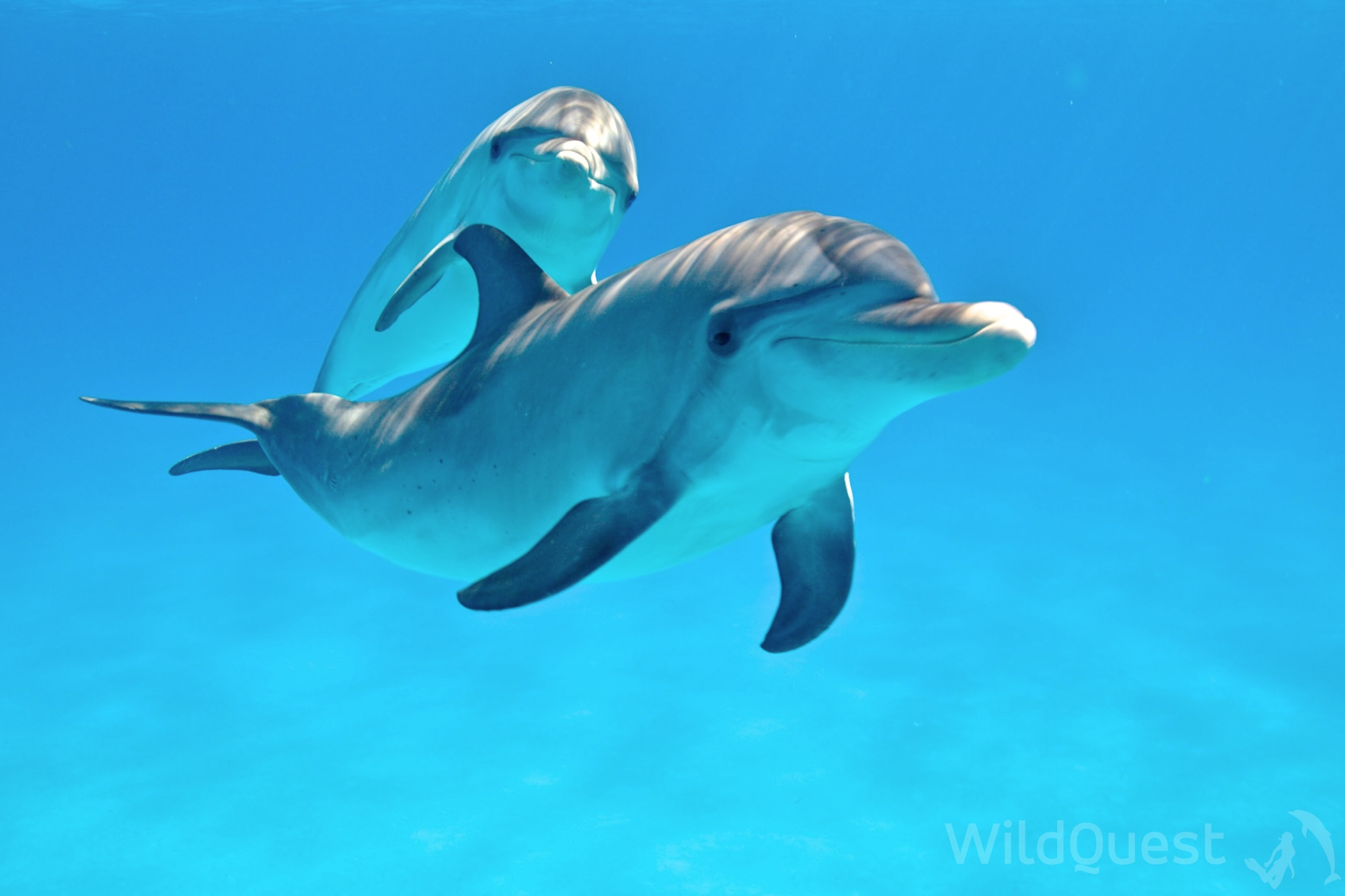Dolphin Dragon Riding