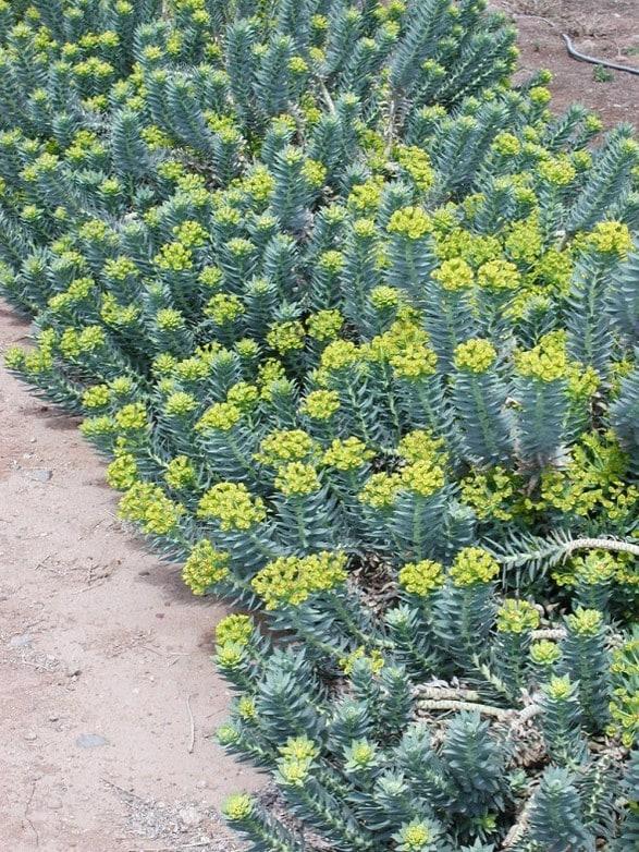 Yellow Flowering Water Plants