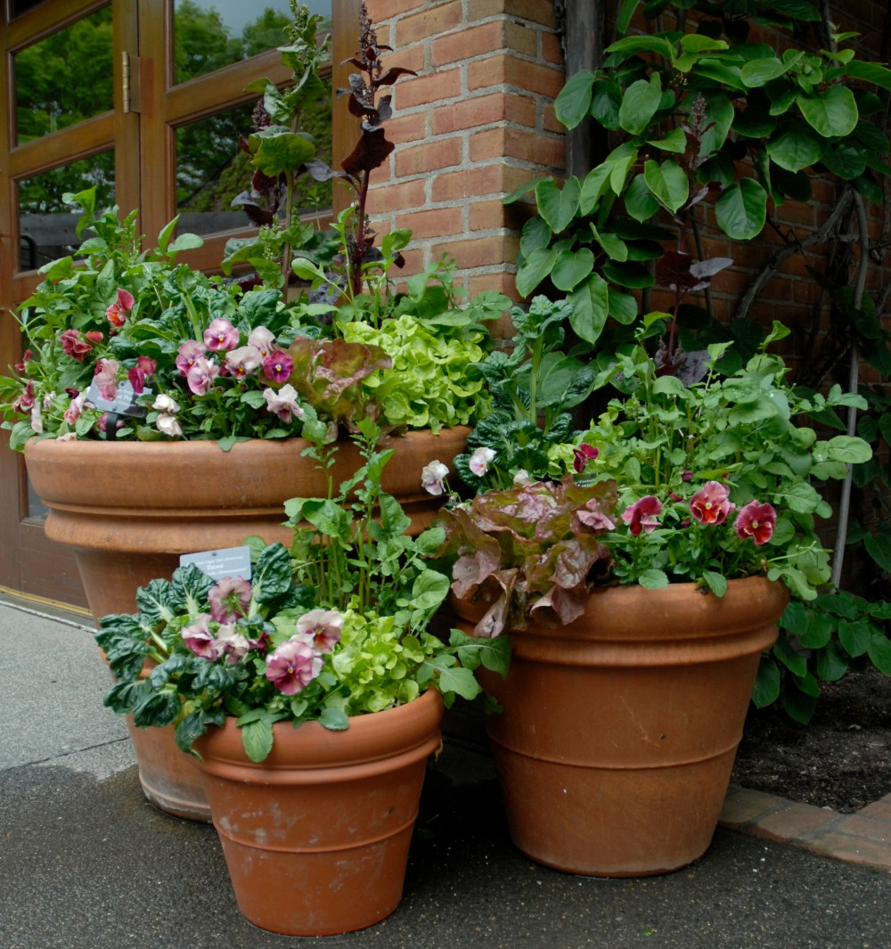 Design Your Own Container Garden