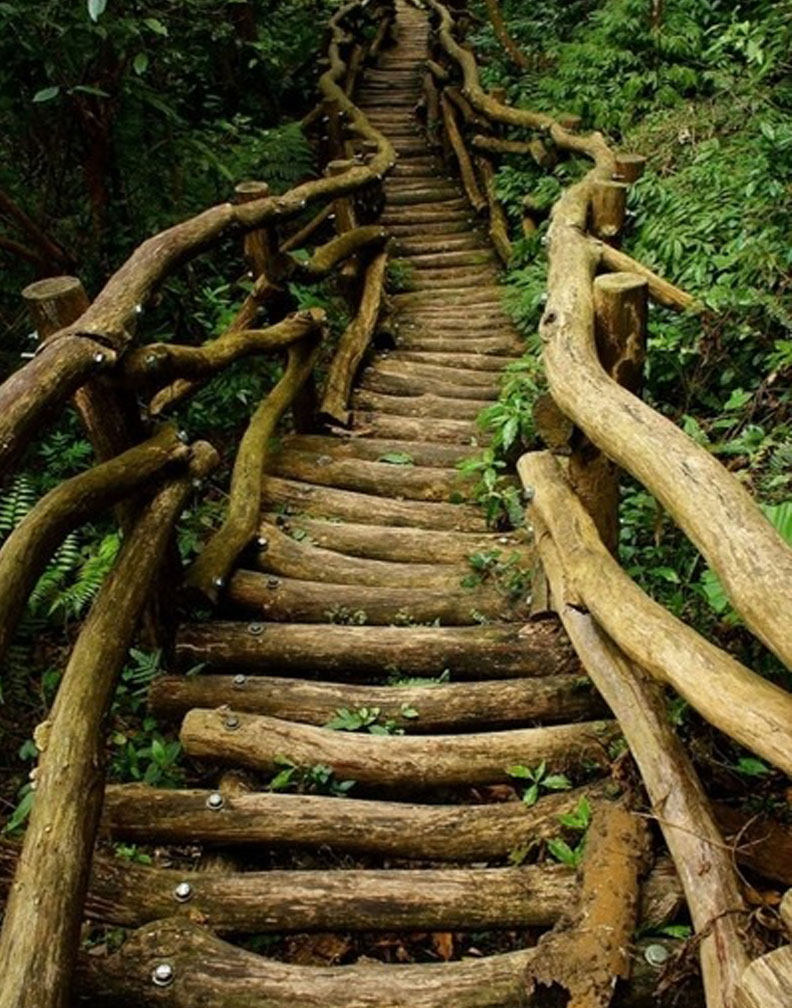 Breathtaking Wooden Pathways That Are Just Perfect For
