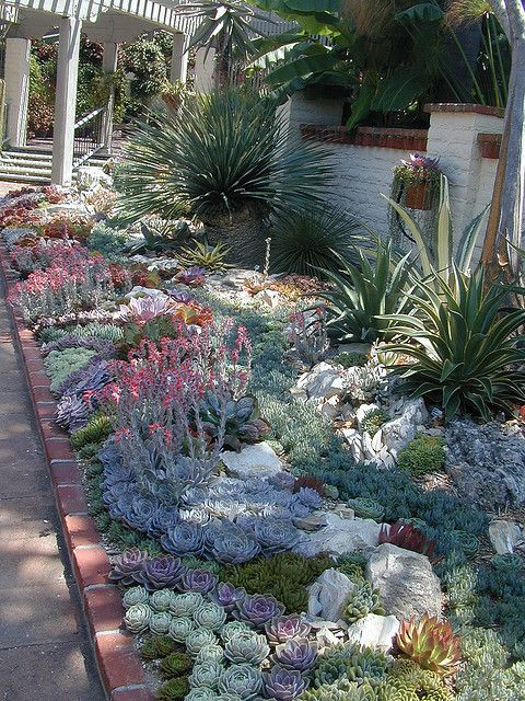 Tips To Grow Succulents Outdoors Page 2 Of 2