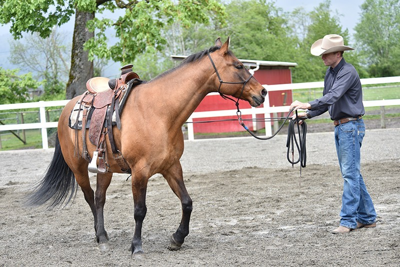 groundwork horses - 800×534