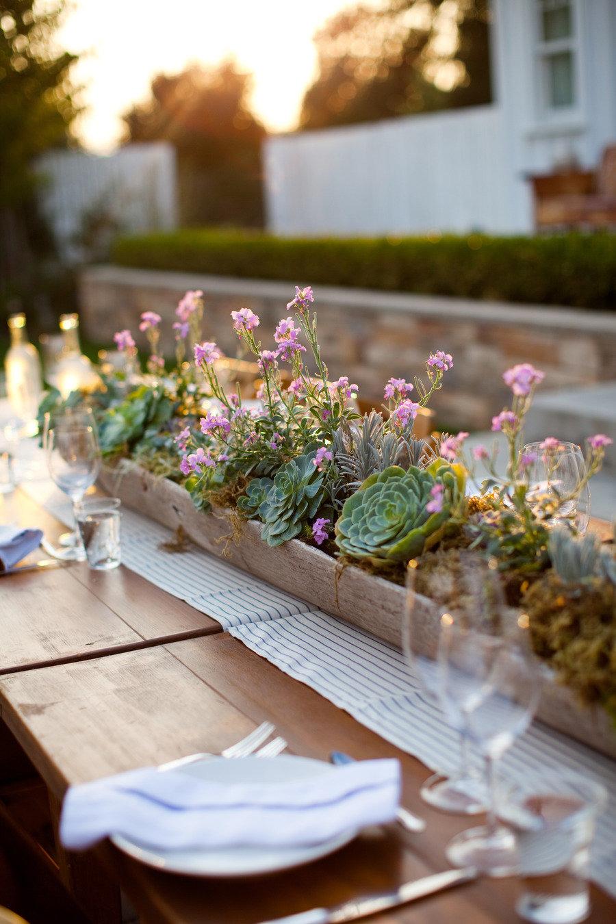 Succulent Plants Pics