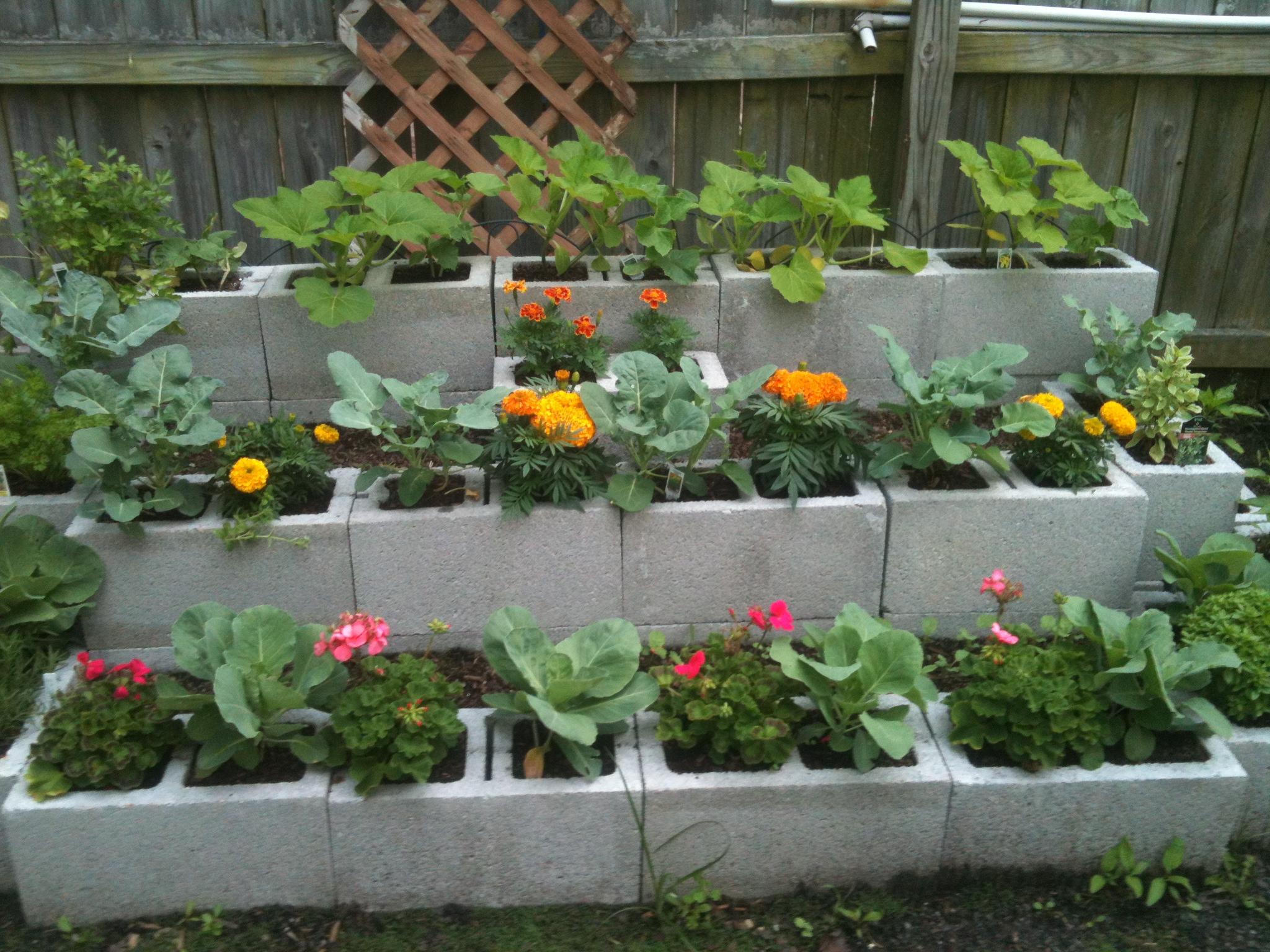 Best Wood Outdoor Raised Garden