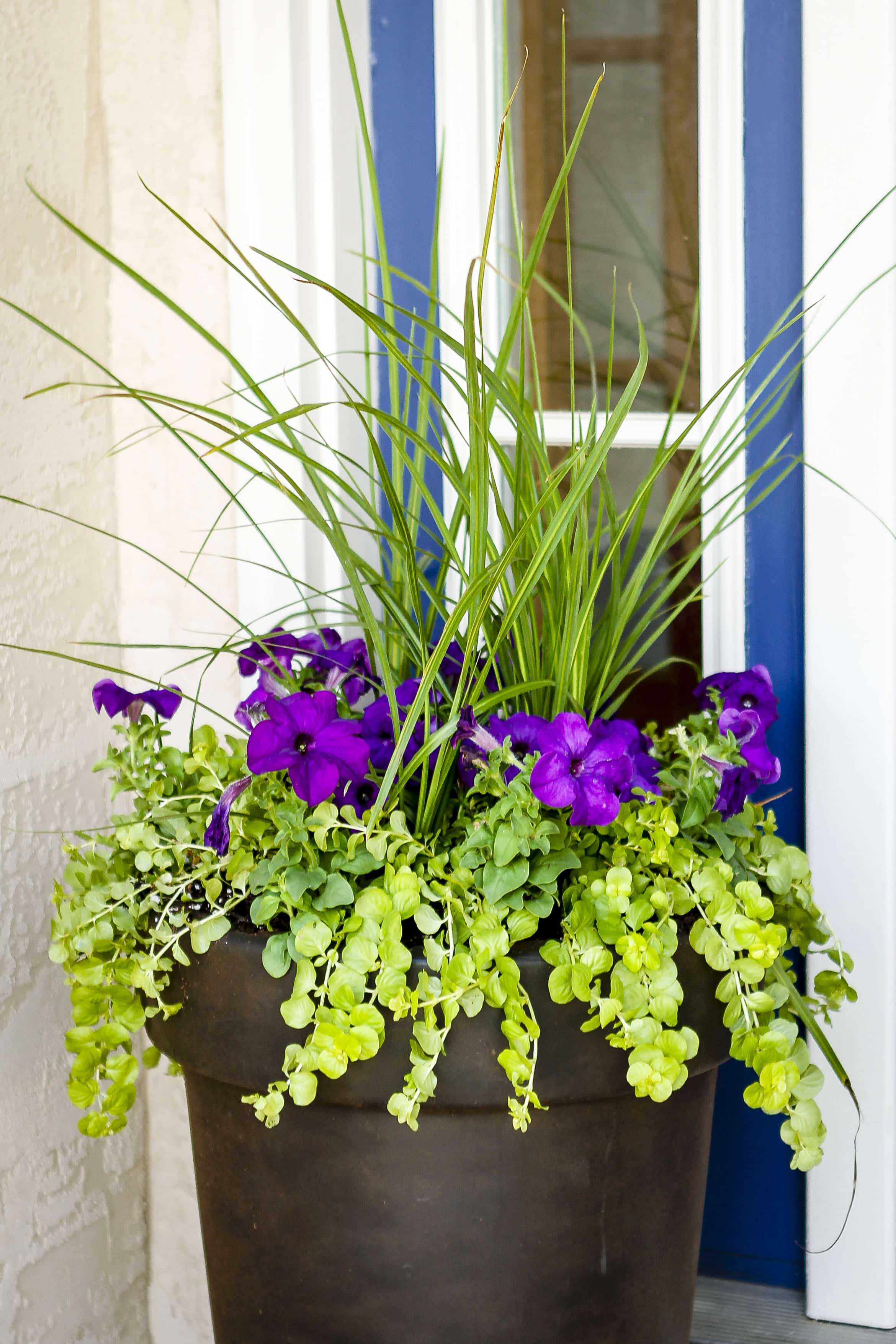 Outdoor Container Ideas