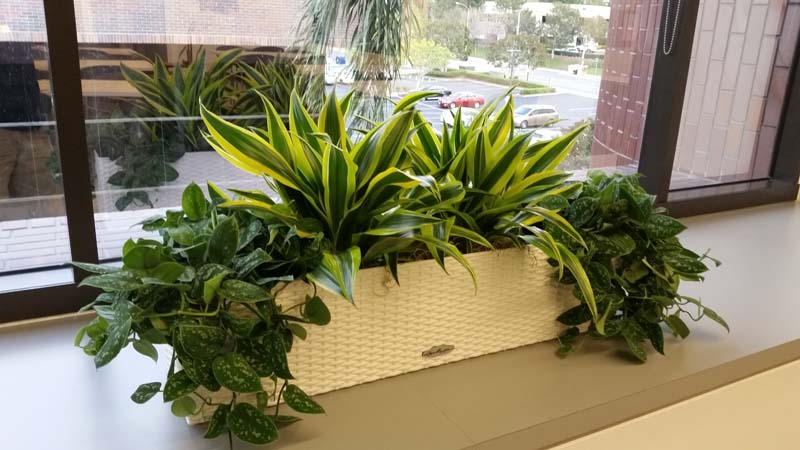 Window Box     Interior Plants Design     Plantopia     Interior Plant Service Window Box     Interior Plants Design