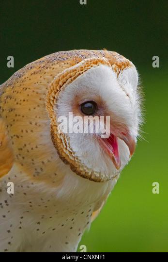 Owl Stock Photos & Owl Stock Images - Alamy