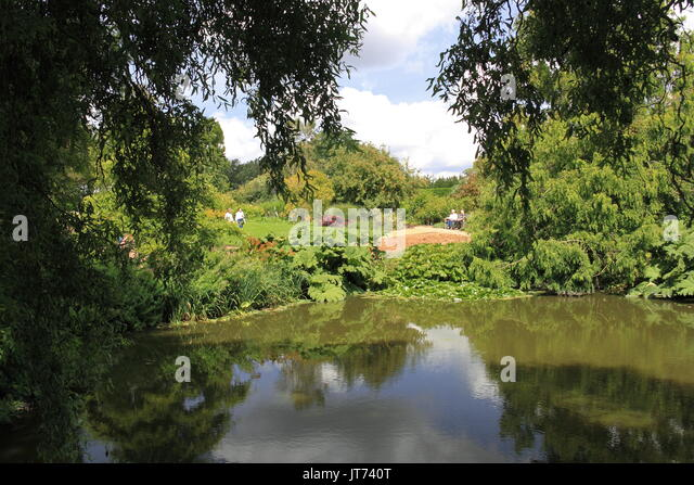 Water Lilies Deep Ponds