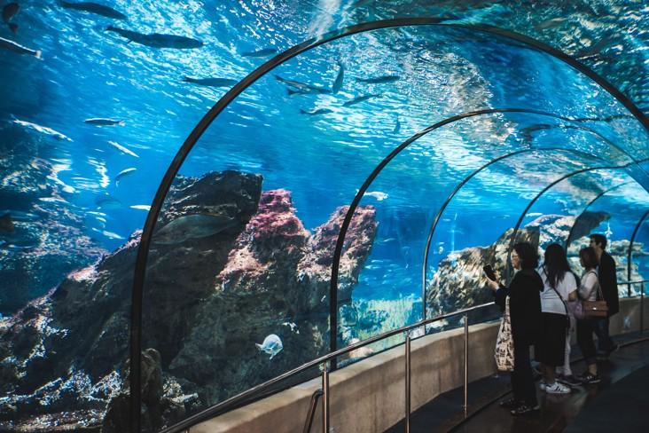 Akvárium Barcelona, španělsko