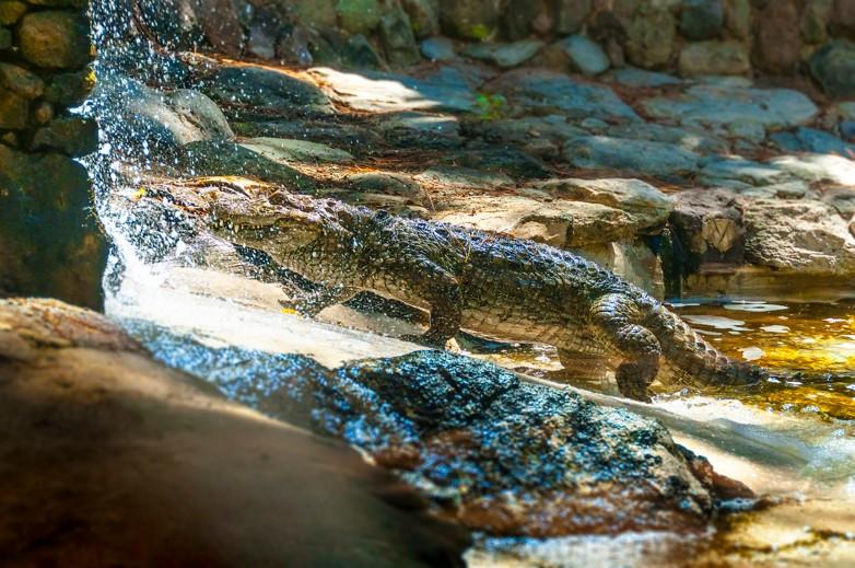 Krokodýlí park Gran Canaria
