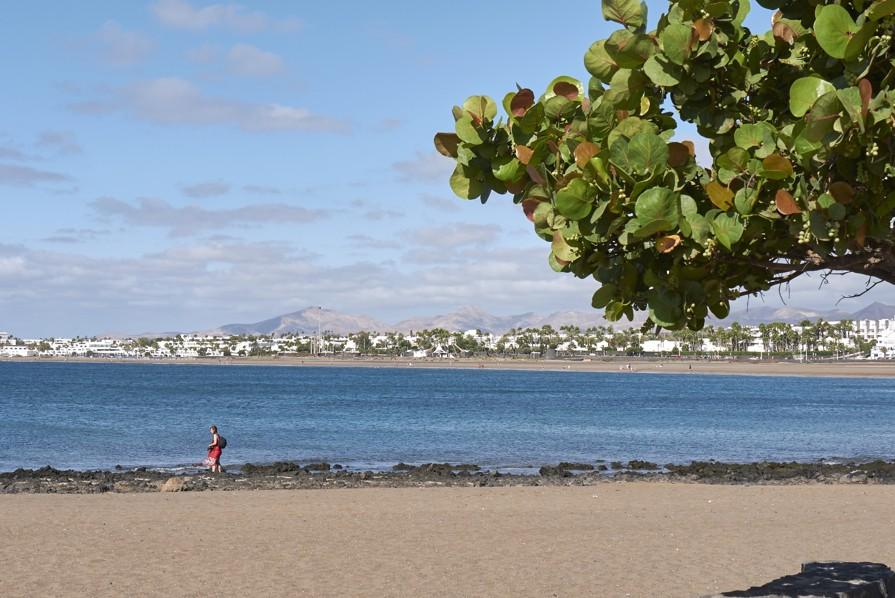 Playa de los Pocillos, Lanzarote