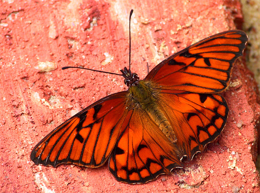Butterflies Beautiful Eyes