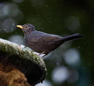 What The Beatles Song 'Blackbird' Was Really About | Audubon