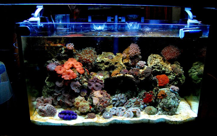 Reef Aquarium Led Lighting