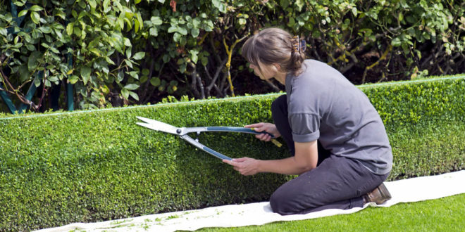 Garden Planter Box Plans