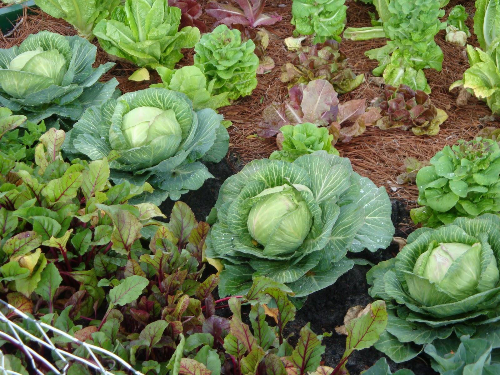 When Plant Vegetables