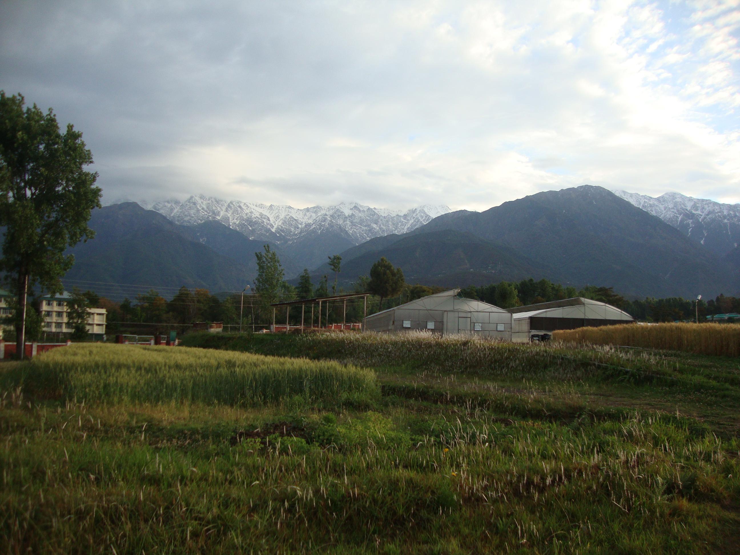 Csk Hp Agricultural University Palampur Himachal Pradesh