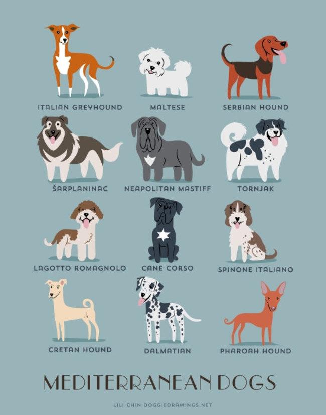 Anatomy S Heart Dog Dog