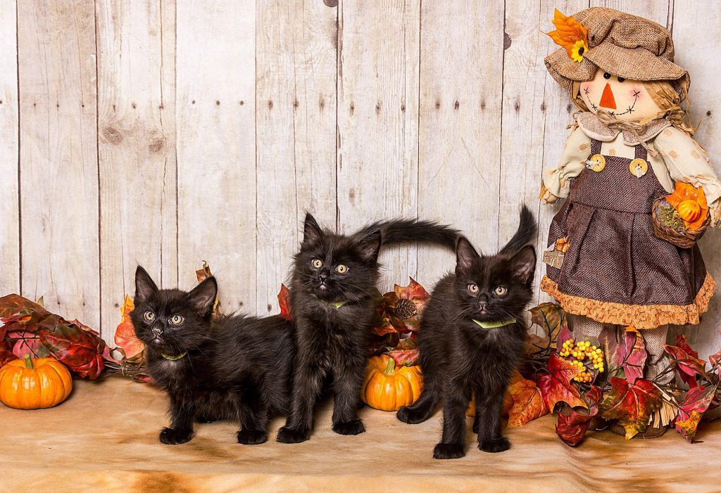 Adopt A Pet Cats And Kittens Nevada Humane Society