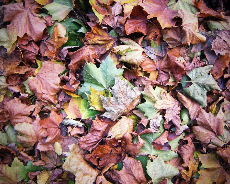 pile of leaves - 900×720
