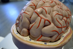 Use your BRAIN(ED): Navigating Choices in Childbirth using THIS easy to remember Acronym