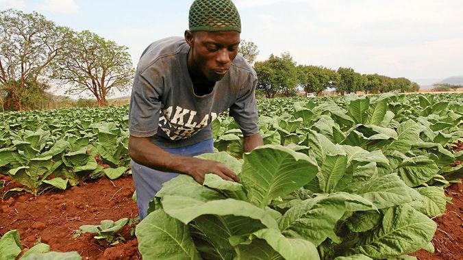 White Farmers Zimbabwe Today