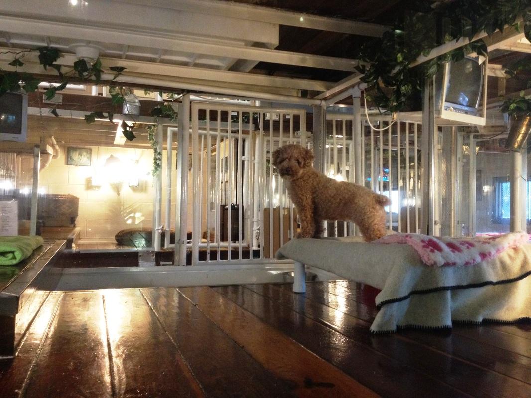 Animal Clinic Near Me Canine Hotel Suites 🐶 Newport Beach Ca