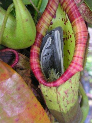 Killer plant 'eats' great tit at Somerset nursery - BBC News