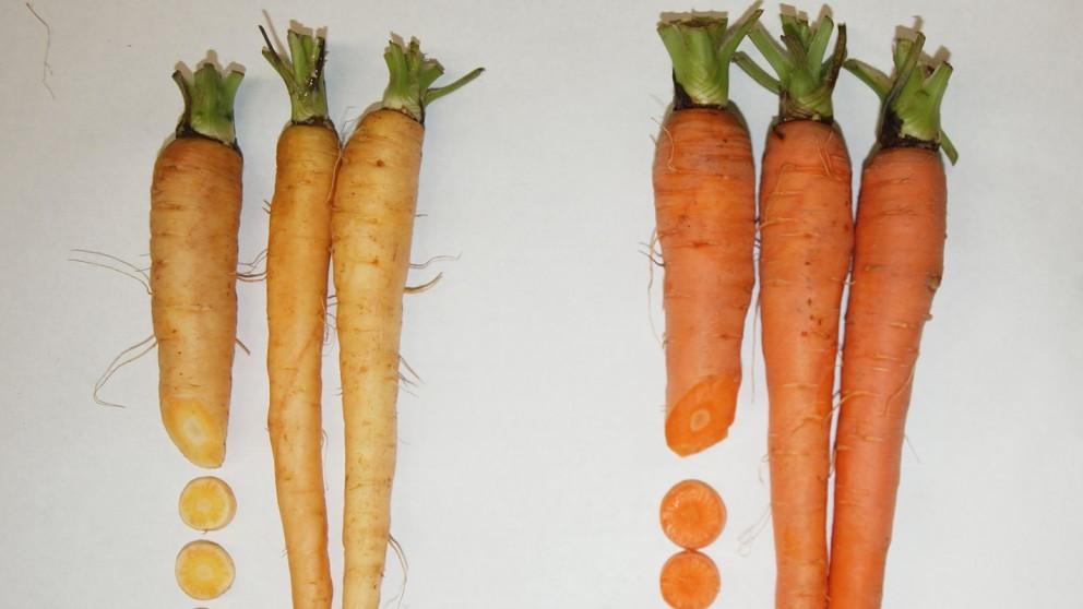 Bunny Light Carrot Bug