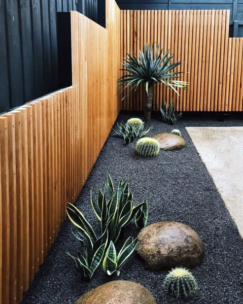 Small Cactus Types
