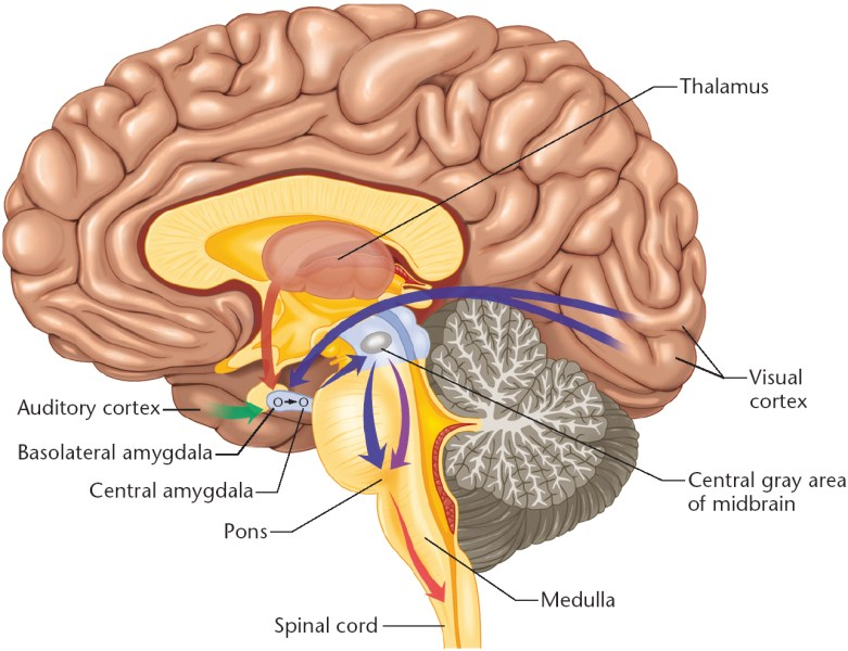 Brain diagram diagram collection diagram interior brain diagram full hd maps locations another world library brain anatomy internal brain diagram product ccuart Image collections
