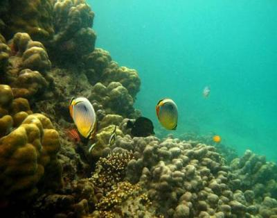 CUBADAK Island, West Sumatera, INDONESIA | my WORLD