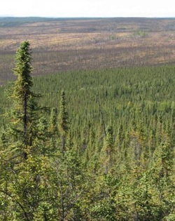 Alaska   Northern Plant Ecology Lab   Dr  Jill Johnstone Boreal forest resilience in interior Alaska