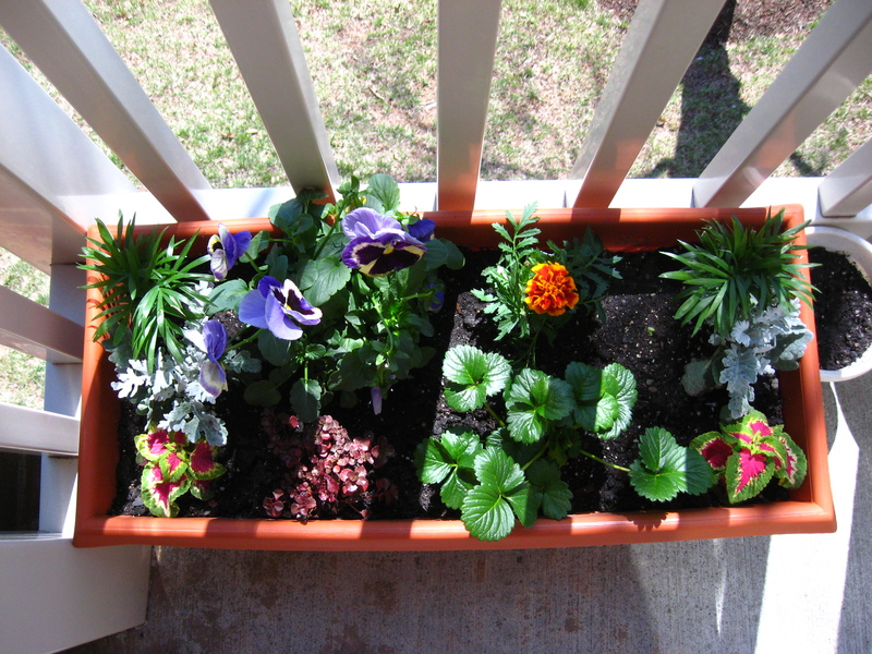 Small Apartment Balcony Garden Ideas Gardening Living