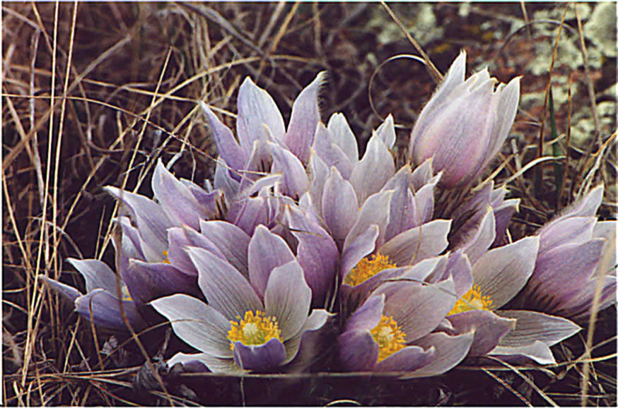 Tundra Biotic Or Abiotic