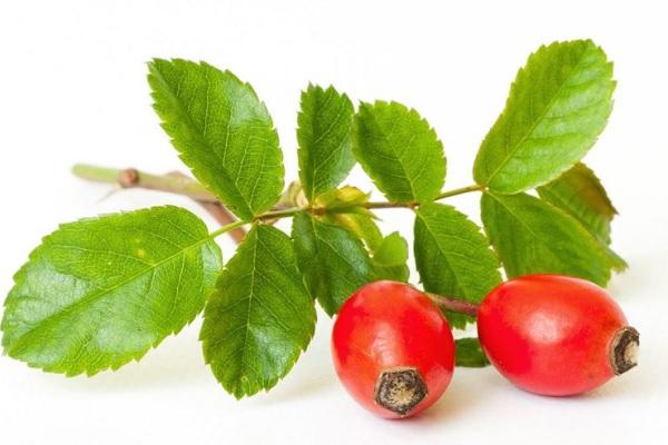 玫瑰果浆果