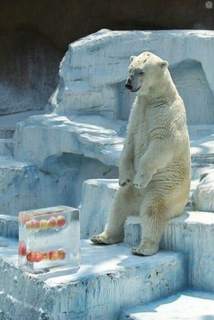 bear wrongs patiently pictures - 695×1036