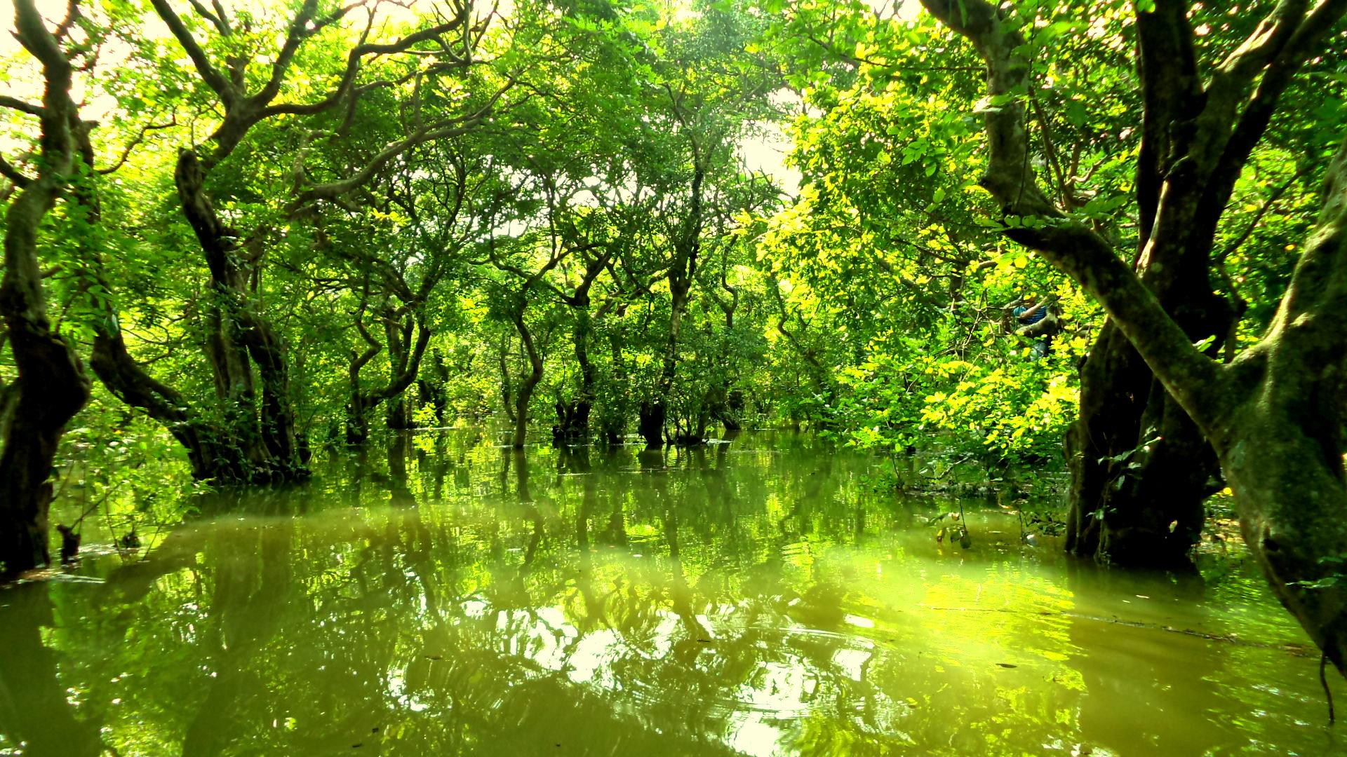 Wildlife Garden Pond