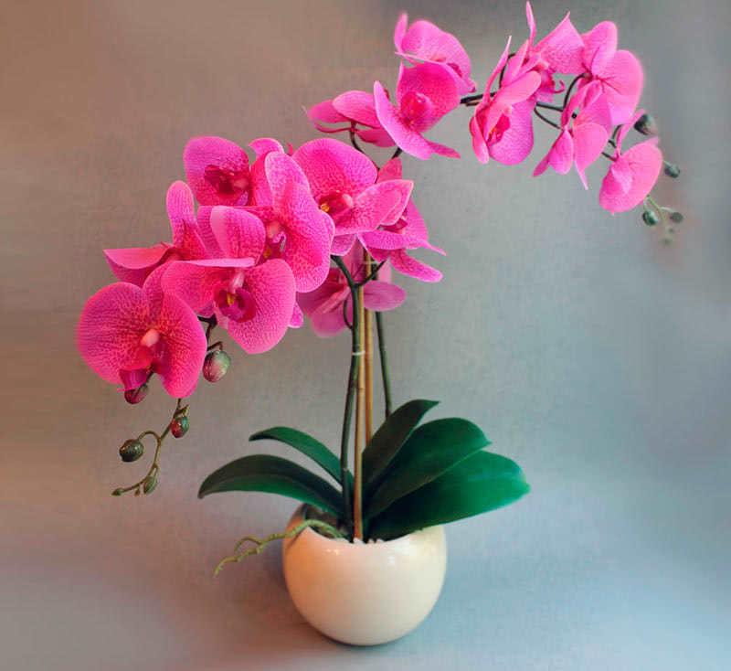 Орхидея гүлдену
