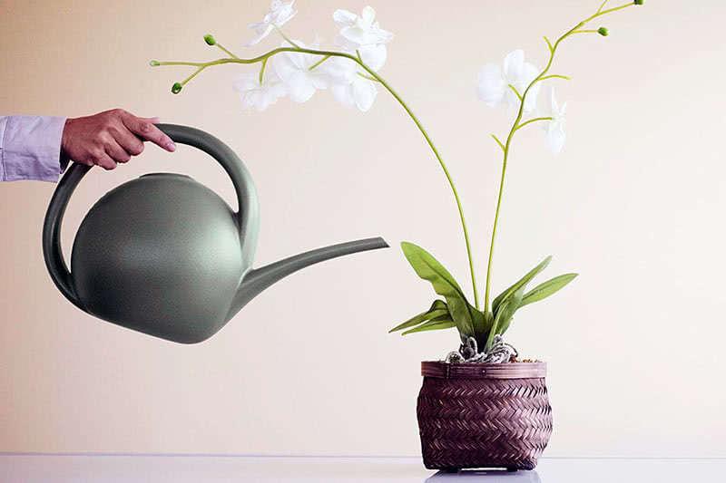 Суару орхидеялары