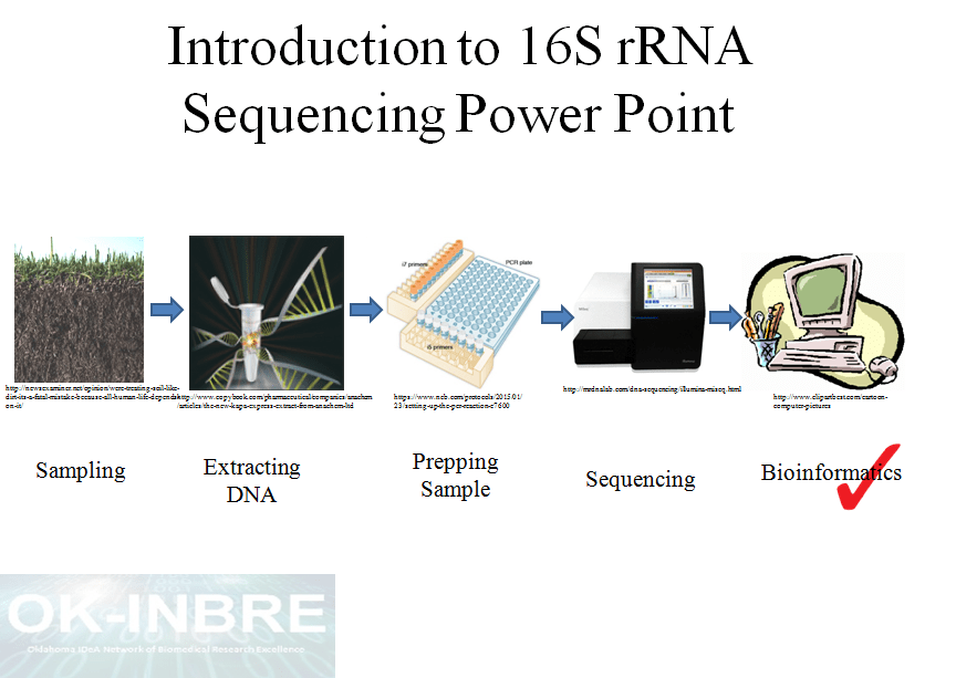 Introduction To 16s Rrna Sequencing