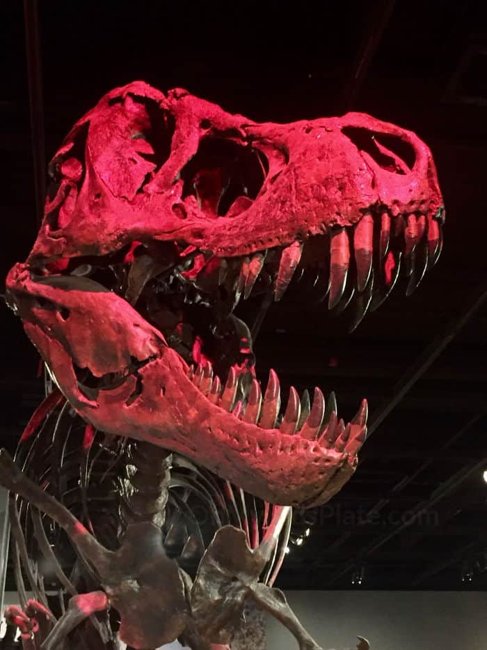 A large cast of Sue the tyrannosaurus Rex stands light by bright red spotlights.