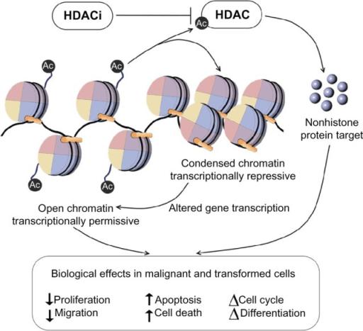 Hypoxia And Angiogenesis Inhibitors