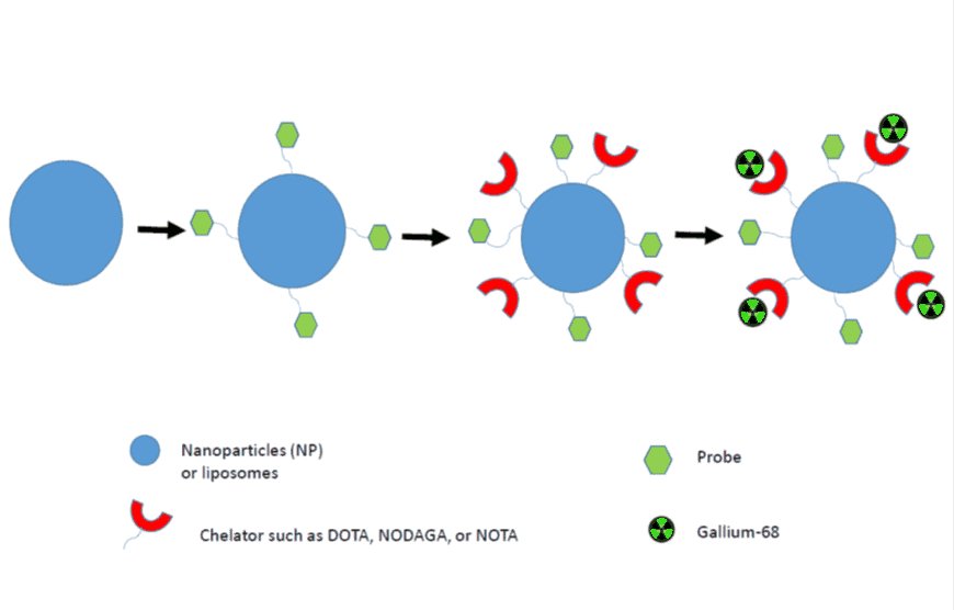 A diagram showing the in vivo synthesis of nanoparticles labelled with the gallium-68 radiotracers for PET imaging