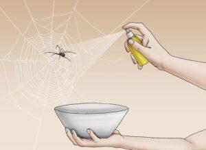 Phá hủy nhện trong căn hộ