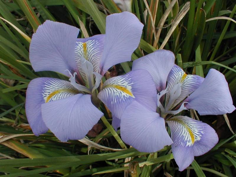 Flowers that Grow in January and February   Orchid Flowers Winter Iris