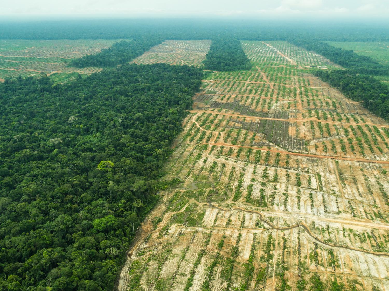 amazon rainforest deforestation - HD1500×1125