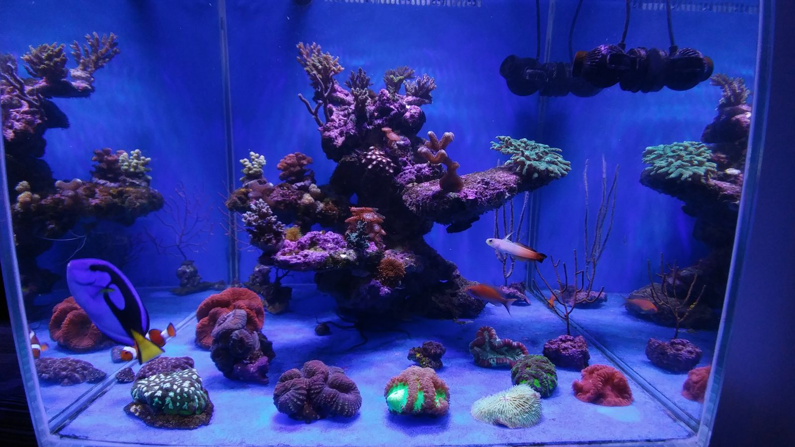 Best Aquarium Led Lighting 2017